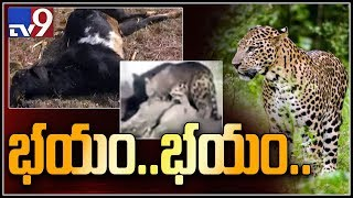 Leopard attacks residents in Greater Hyderabad - TV9 Ground Report