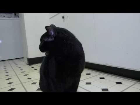 Коты зевают / Видео: Животные