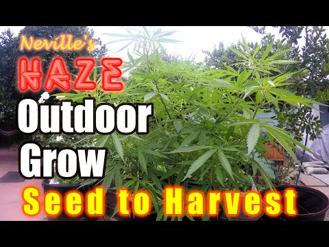 Outdoor Organic Seed to Harvest- Easy & Cheap way of growing!