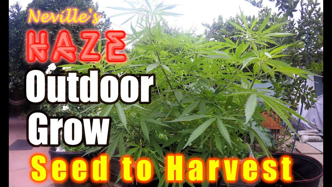 Download Outdoor Organic Seed to Harvest- Easy & Cheap way of growing!