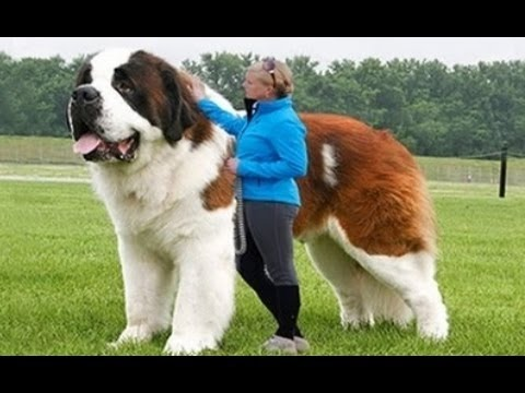 Download top 10 expensive dog 2017