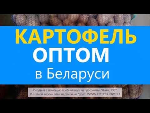 31 мар 2015. Для выращивания картофеля в условиях восточно-сибирского. Сорта картофеля для иркутской области, красноярского края,