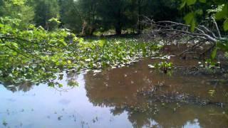Claypit Pond