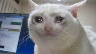 sad cats :(
