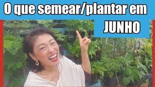 Quais Plantas Prometem ser Sucesso na sua Horta no Mês de Junho