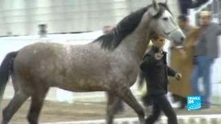 Souvenir d'Algérie : deux chevaux en cadeau pour la France