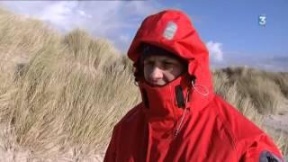 Exceptionnelle naissance d'un phoque gris en Baie de Somme