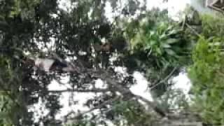 Video bugil di hutan download MP3, 3GP, MP4, WEBM, AVI, FLV Oktober 2018