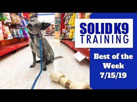 solid-k9-training-center-best-of-the-week-7/15/19