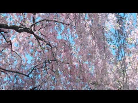 Isadora ~ Paul Mauriat (HQ Audio)