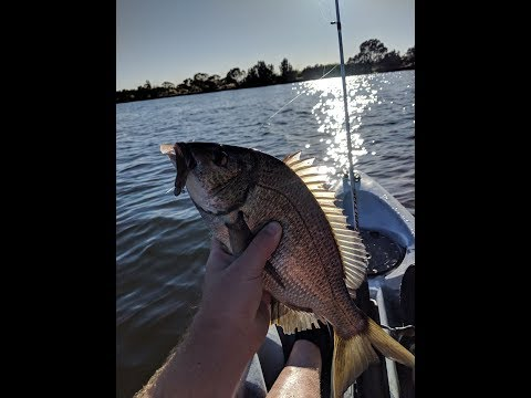 Bream On Soft Plastics Tips: Swan River Western Australia