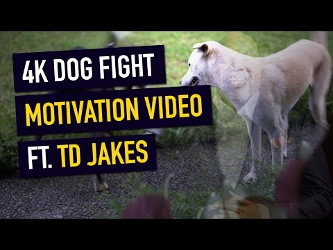 4K DOG FIGHT MOTIVATIONAL VIDEO (If You're Going Through Challenging Times WATCH THIS)