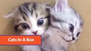 Kittens Come Out Of Box
