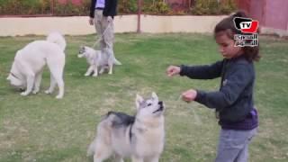 عالم تربية الكلاب.. هواية تتحول لـ«احتراف»