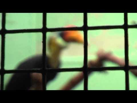 vogel kaketoe dierentuin snavel