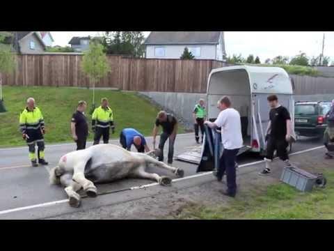 29 06 2015 Redningsaksjon for hest