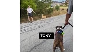What's your name? Funny dog meme/ TikTok