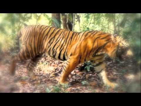 James Biddix 4th Grade Tiger Rising Video Project - YouTube