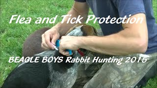 Flea And Tick Protection - Beagle Boys Rabbit Hunting 2015