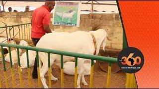 Le360.ma • Salon des races animales de Bamako
