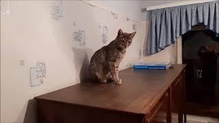 Опять про кошек