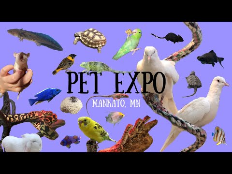 Pet Expo Shop in Mankato, MN