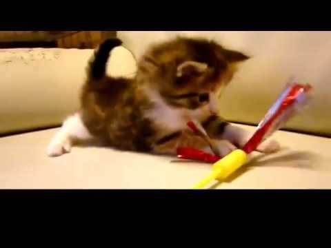 Lifecycle Of A Cat Pregnancy Ultrasound Newborn Kitten Adult Old Cat Youtube