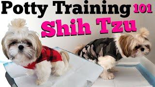 How to Potty Train your Shih Tzu PUPPY