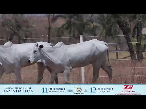 LOTE 177
