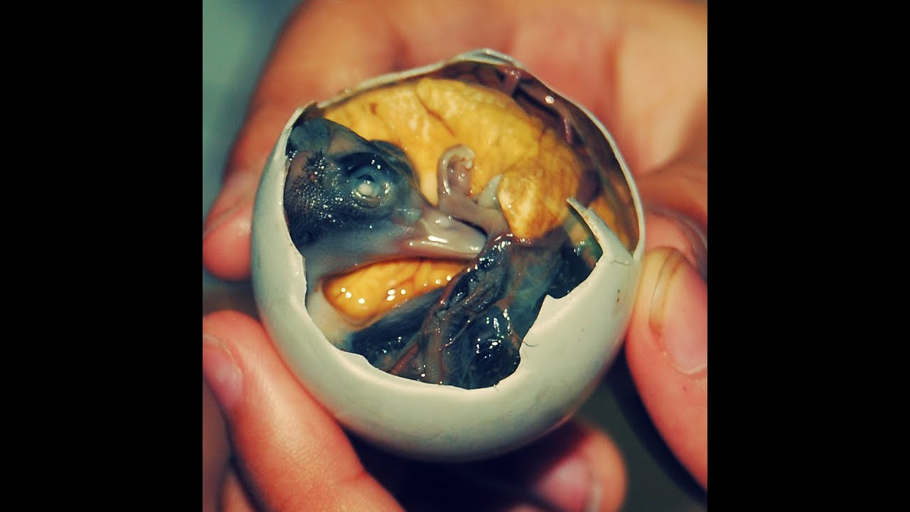 Image result for balut