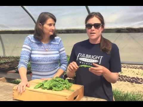Dig In - Farm Fresh Greens