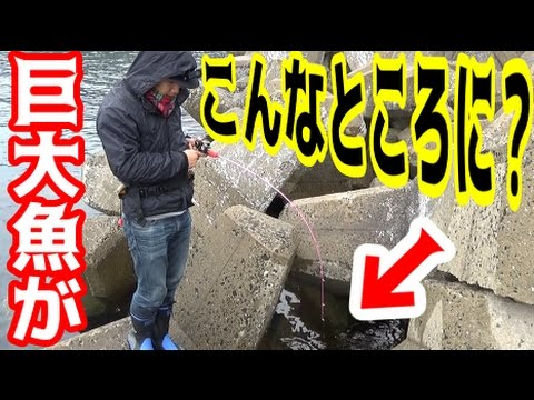 新��穴��地を発見�巨大魚を釣り上���