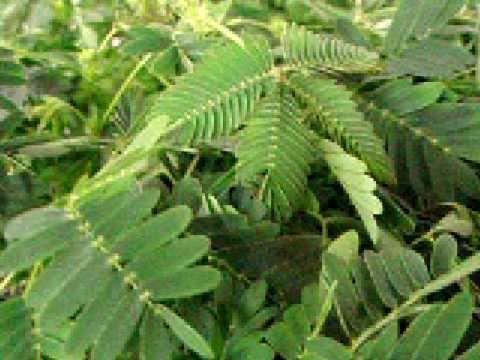 Plants,garden plants,plants & garden,plants for garden,where to buy garden plants