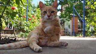 Relaxing Cat Video 169