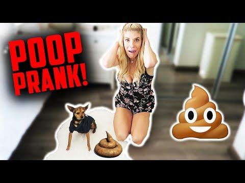 HILARIOUS FAKE DOG POOP PRANK! (DAY 180)