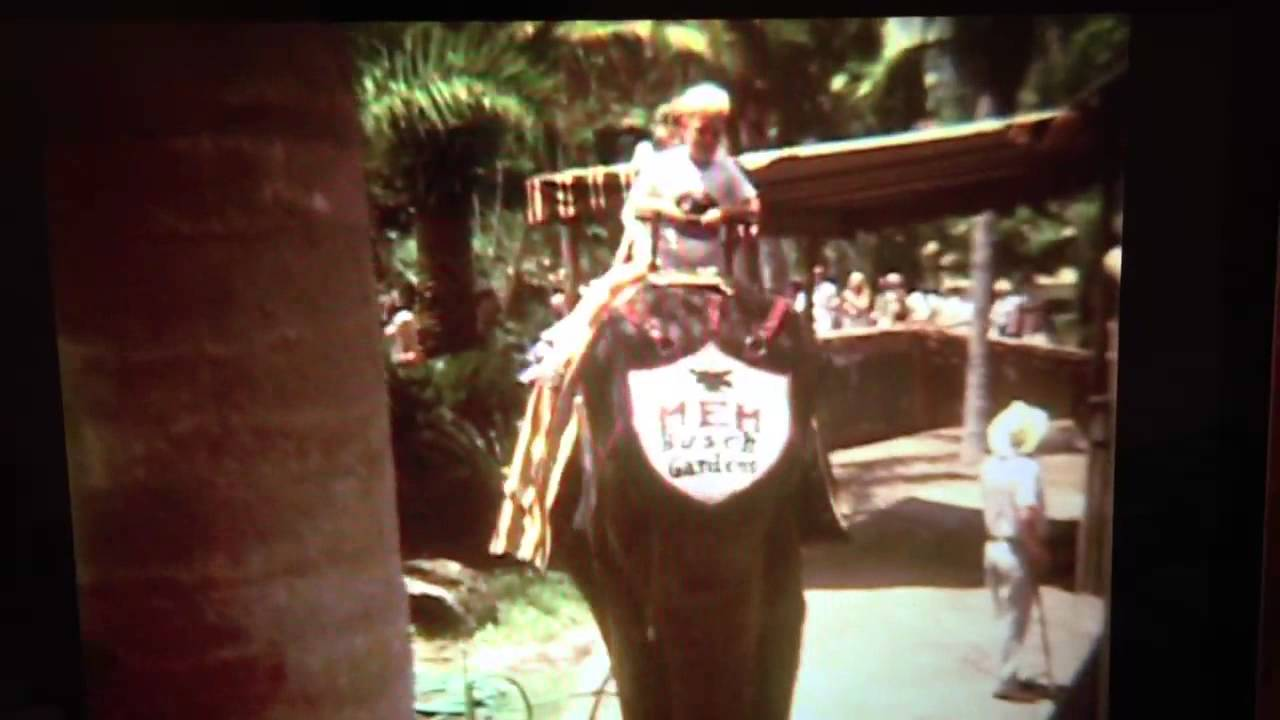 Busch Gardens riding an elephant - YouTube