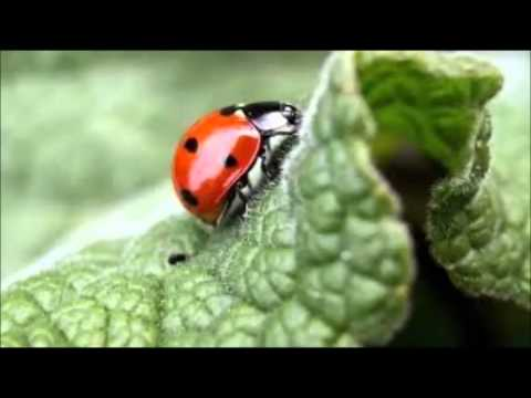 Little Cutie Bugs, Co writer: Jonathan Brosnan - YouTube