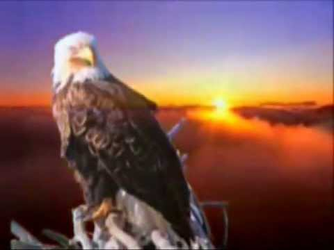 Marcelo S. Rocha -    A Dream of Eagles