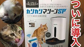 猫2匹の自動給餌器を使った人生初めてのご飯がおもしろい!           Two kittens Two rice cute with automatic feeder