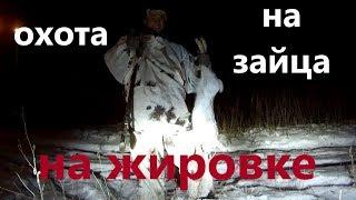 Охота на зайца ночью видео на жировке