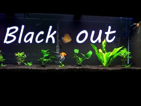 Blacking Out My $1200 Fish Tank!