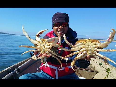 oregon coast crabbing - catching big dungeness crabs in a bay