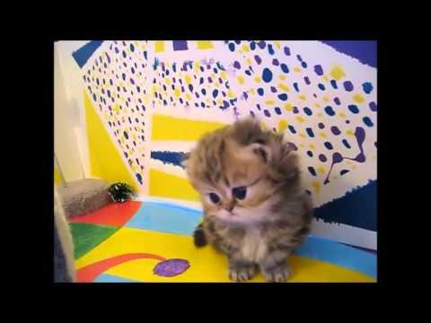 【悶絶級!】死ぬほどかわいい子猫たち【キュン死注意】