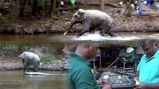 Injured elephant treated by wildlife officers
