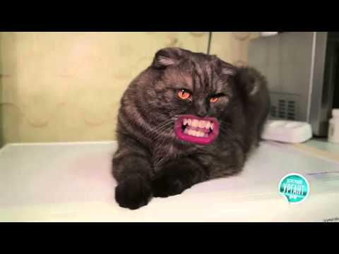 Поющий кот видео ютуб