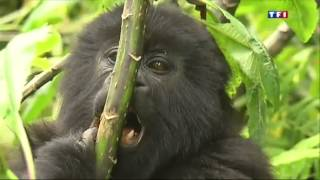 Le Rwanda, un trésor caché de l?Afrique