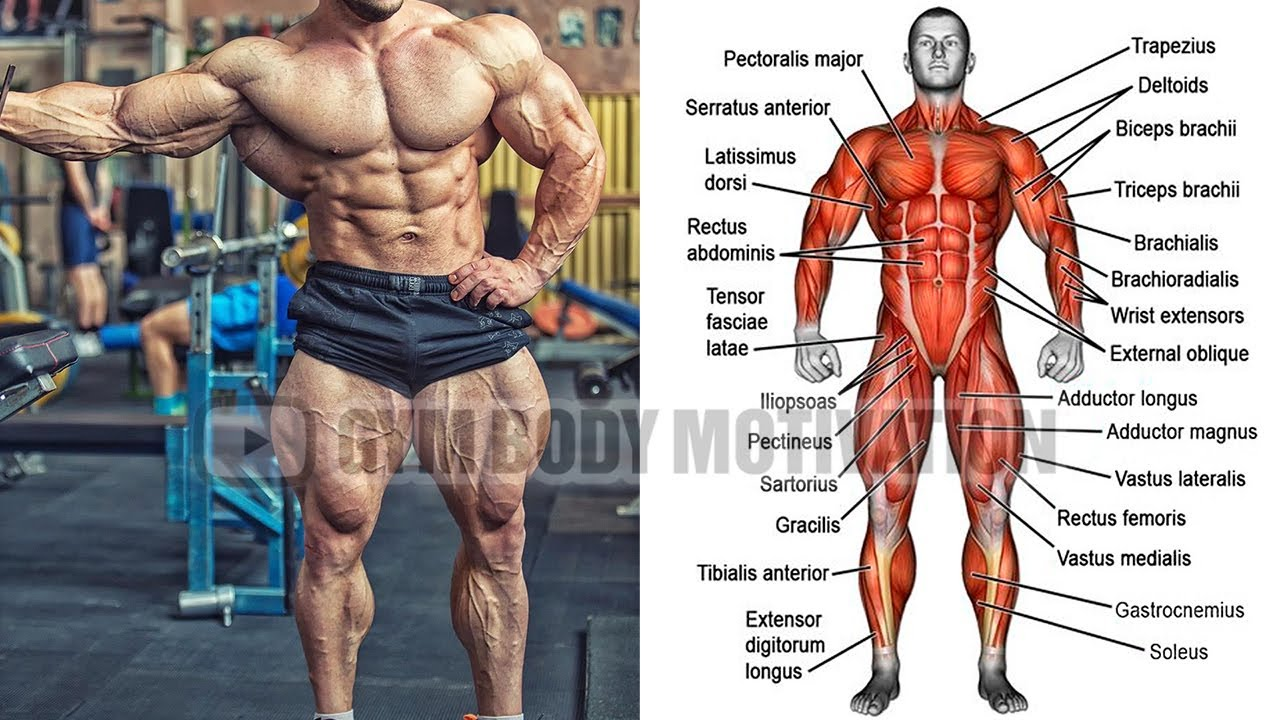 The BEST Full Body Workout For Growth