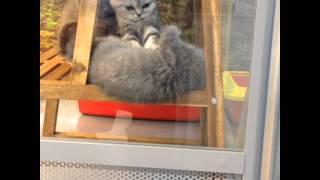 Массаж от котят, милота)