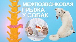 Межпозвоночная грыжа у собак.