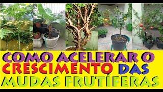 4 Dicas para Acelerar o crescimento de Mudas e Plantas novas!